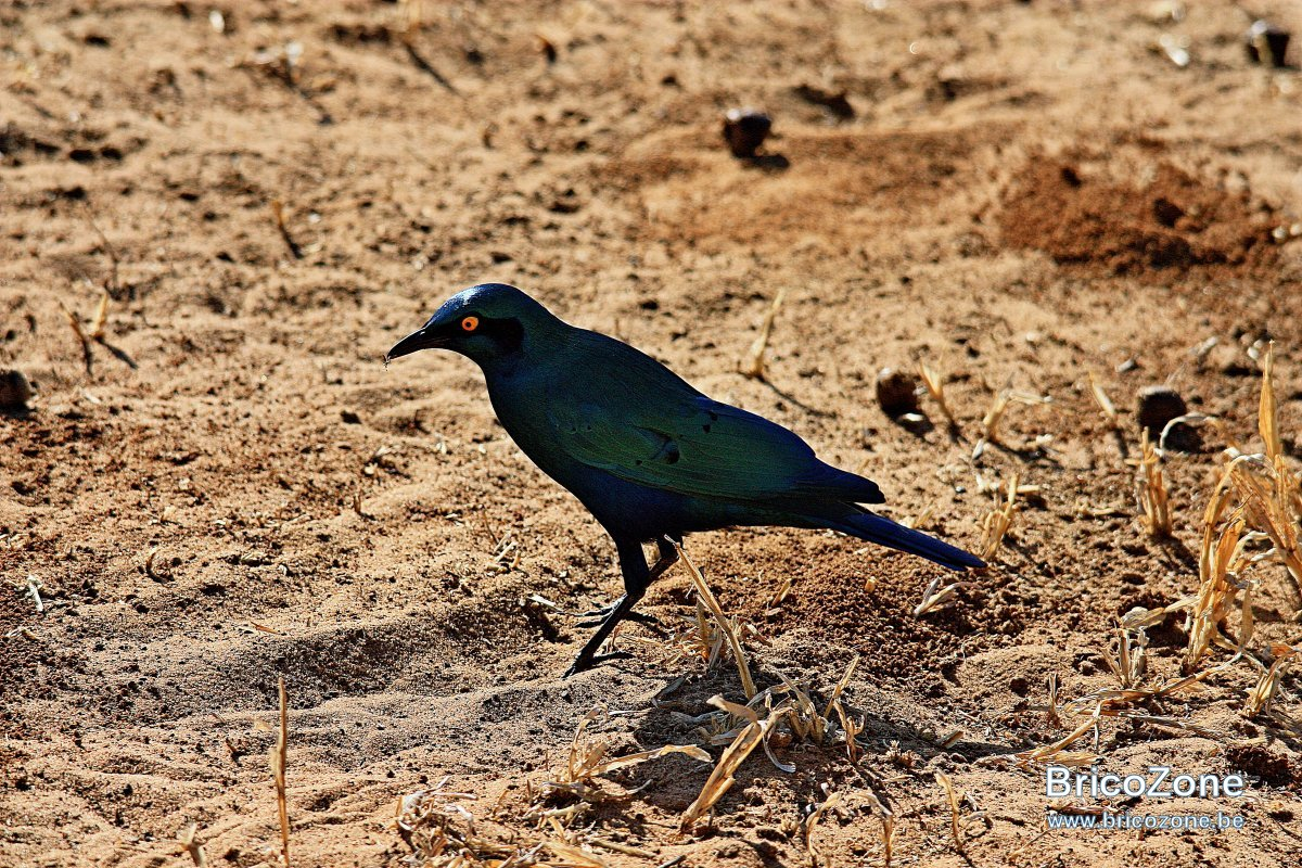 Zimbabwe201307-01 290.jpg