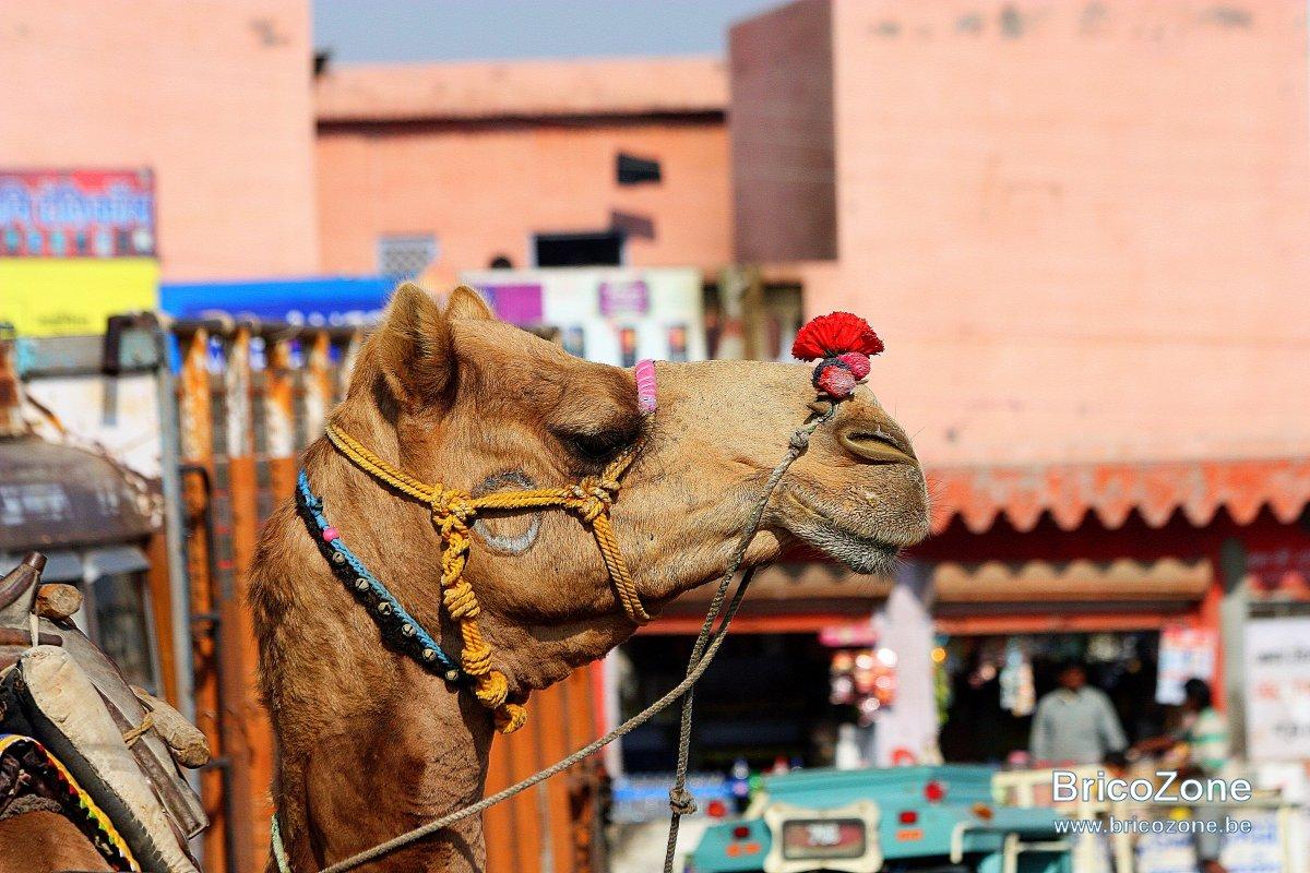 Rajasthan2011complet 1109.jpg