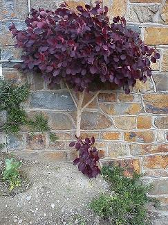 Comment ralentir la croissance d'un arbuste