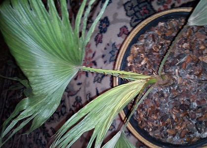 Identification de deux plantes malades