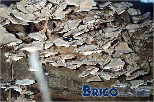 Moisissure mur exterieur great nettoyant de moisissures for Nettoyage mur exterieur