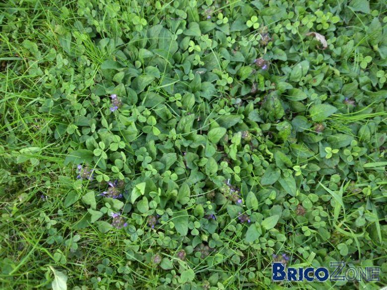 Identification intrus pelouse - Quand planter de la pelouse ...