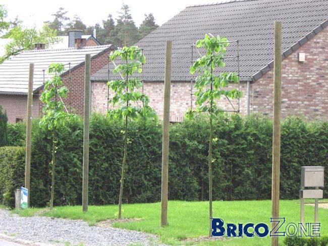 Tuteurs de plus de 3m pour arbres palissés