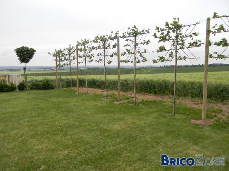 tuteurs de plus de 3m pour arbres paliss s. Black Bedroom Furniture Sets. Home Design Ideas