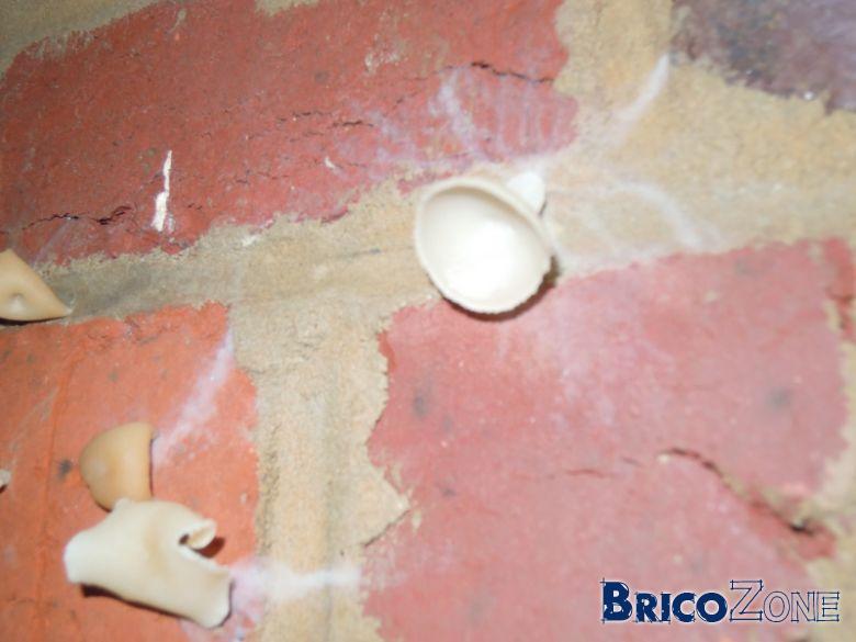 champignon inconnu dans un mur de la cave, la cause un tuyau?