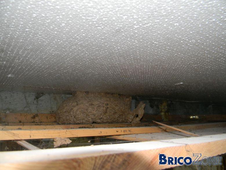 Nid de gu pes ou d 39 abeilles for Nid d oiseau sous toiture