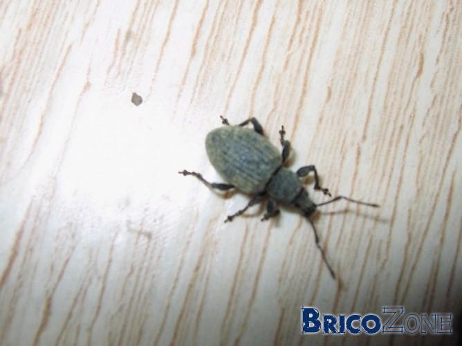 bete d humidit maison affordable insectes humidite salle de bain topic des insecte humidite. Black Bedroom Furniture Sets. Home Design Ideas