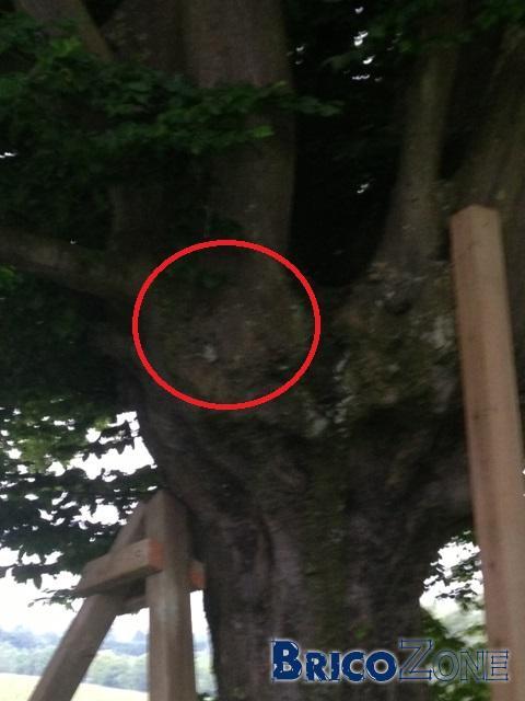 fixation balancoire sur tronc d'arbre