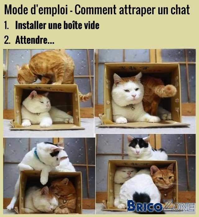 comment faire fuir les chats ?