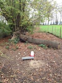 Couper arbre au sol