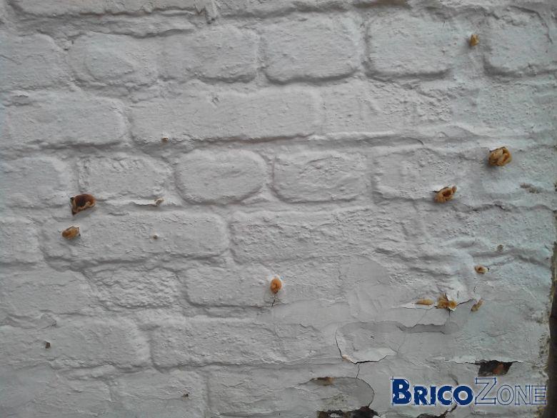 Qu'est-ce que ce champignon sur mon mur mitoyen ?