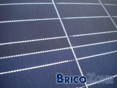 lichen sur panneau photovoltaïque