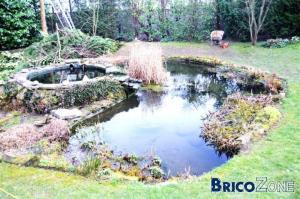 Plantes pour  un  étang