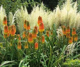 Amenager son jardin a moindre cout meilleures id es cr atives pour la conce - Amenager son jardin a moindre cout ...