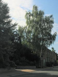 Quels arbres ou arbustes planter au jardin ?