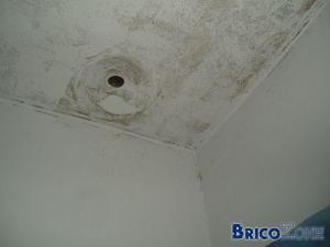 moisissure sur murs de salle de bain
