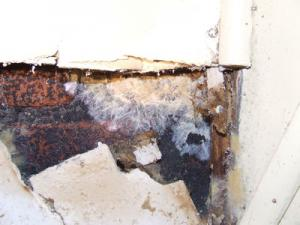 champignons des murs????