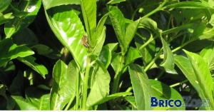Et si on pensait � nos amies les abeilles lors du choix des plantations?