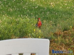 Un perroquet dans mon jardin ?!