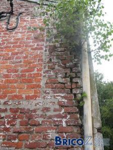 un arbre a pouss� dans le mur