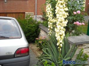 Vos photos de jardin !