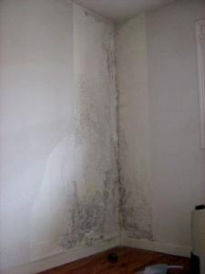 Murs humide, condensation et moisissures vertes dans les gardes-robes
