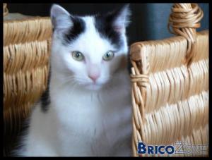 Les animaux de Bricozone