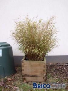 Ecran végétal permanent, dense et pas trop large. Des idées ?!