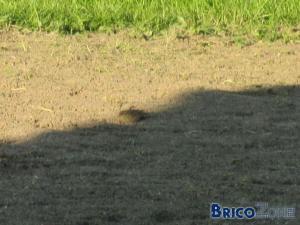 Y a des oiseaux dans ma pelouse fraichement sem�e