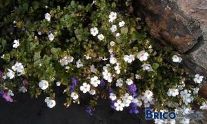 Pouvez-vous m'identifier ces 2 plantes ?