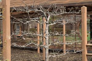 Piquets pour palissage d'arbres fruitiers