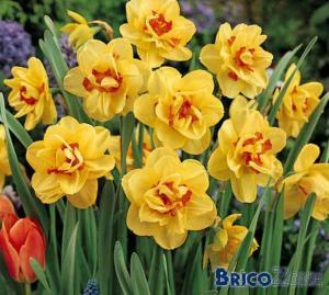 carré de tulipes