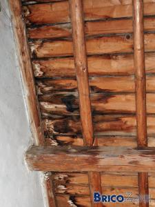 Taches d'humidit� sur charpente