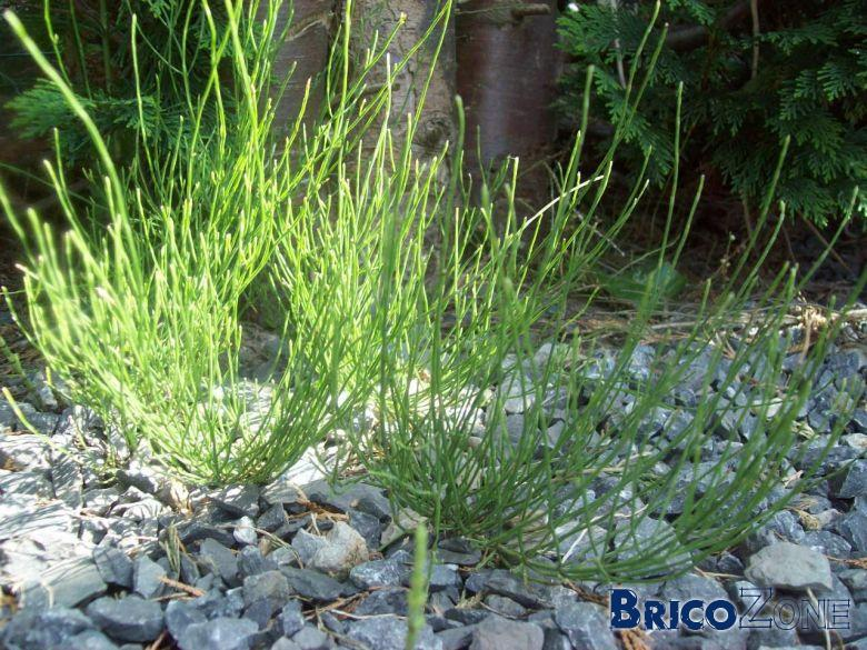Mauvaise herbe !!!