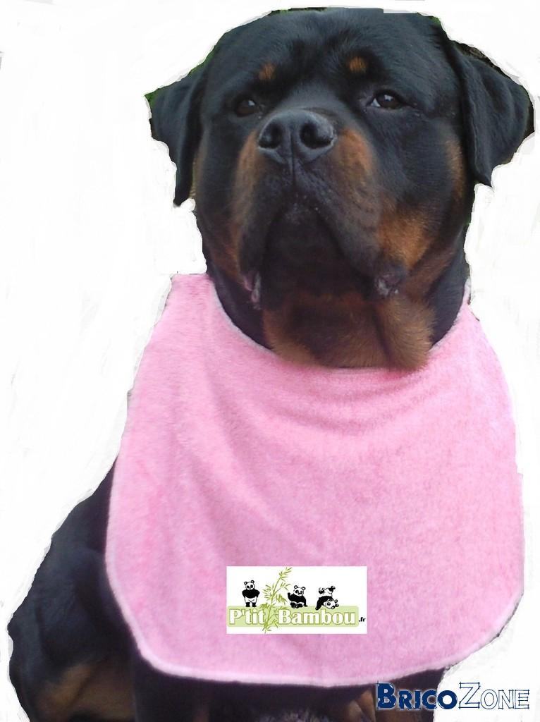 Traces bave de chien sur carrelage for Pipi de chien sur carrelage